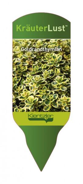 Thymus x citriodorus 'Golden King'
