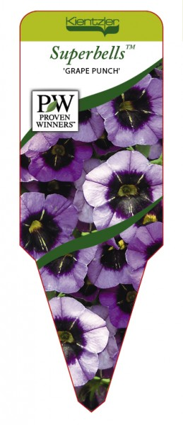 Calibrachoa Superbells 'Grape Punch'