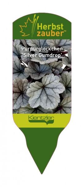 Heuchera Hybride 'Silver Gumdrop'
