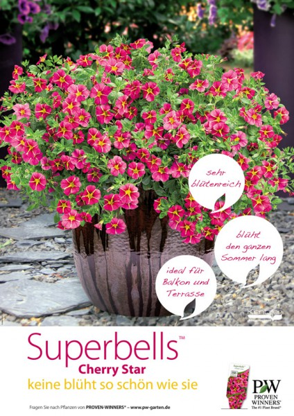 Poster Proven Winners SUPERBELLS™ 'Cherry Star'