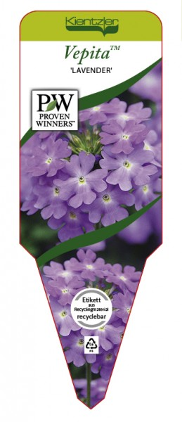 VEPITA™ 'Lavender'