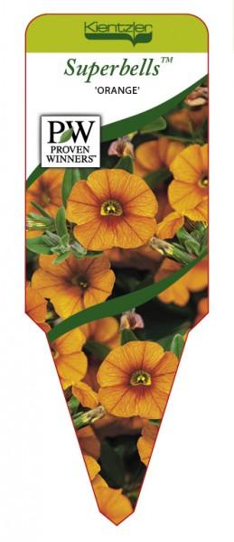 Calibrachoa Hybr. Superbells™ 'Orange'