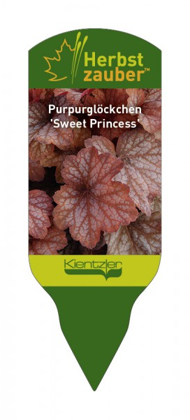 Heuchera Hybride 'Sweet Princess'