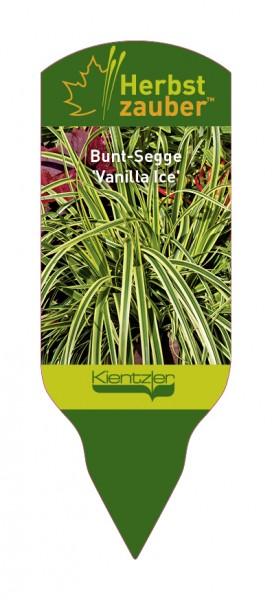 Carex morrowii x foliosossoma 'Vanilla Ice'