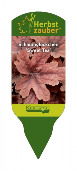 xHeucherella 'Sweet Tea'