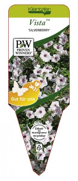 Petunia Hybrid Vista 'Silverberry'