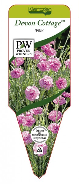 Dianthus Devon Cottage™ 'Pink'