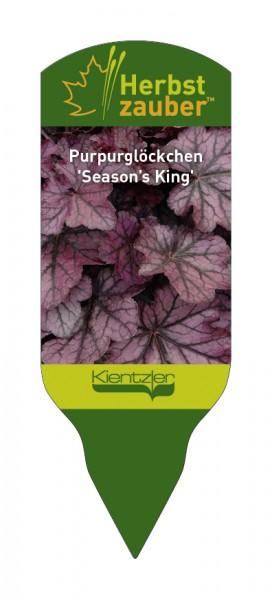Heuchera Hybride 'Season's King'