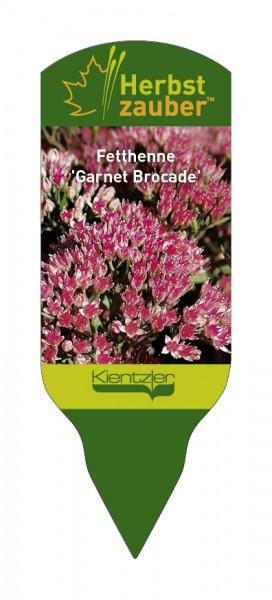 Sedum Hybride 'Garnet Brocade'