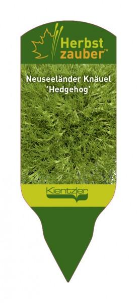 Scleranthus 'Hedgehog'