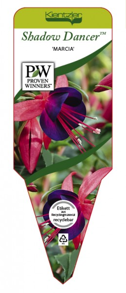 Fuchsia Hybr. Shadow Dancer™ 'Improved Marcia'
