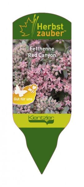 Sedum Hybride 'Red Canyon'