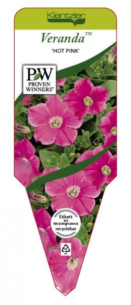 Petunia Veranda 'Hot Pink'