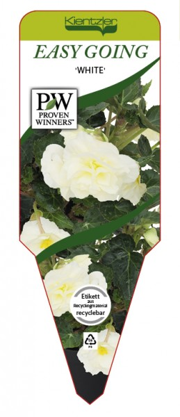 Begonia EASY GOING 'White'