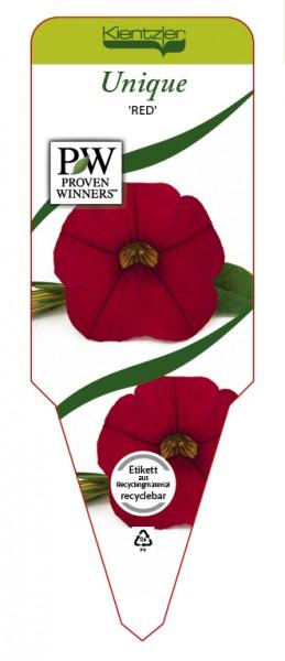 Calibrachoa Hybr. UNIQUE 'Red'