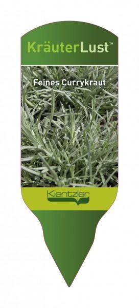 Helichrysum angustifolium - Feines Currykraut
