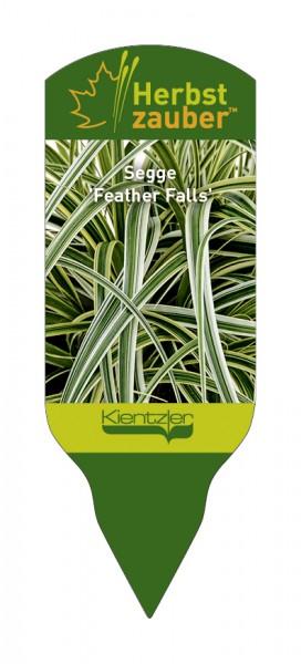 Carex 'Feather Falls'