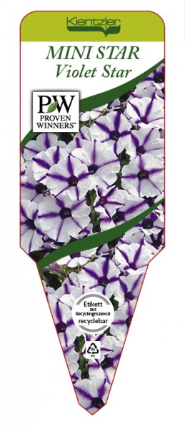Petunia Hybrid MINI STAR 'Violet Star'