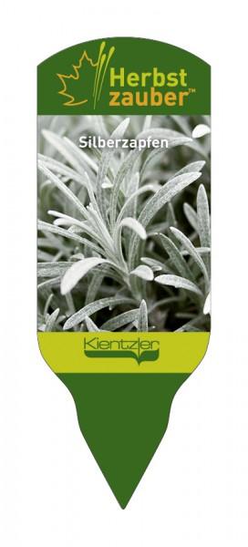 Helichrysum™ thianschanicum