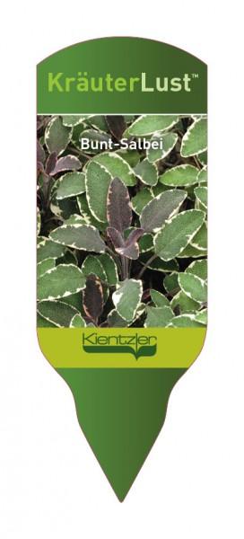 Salvia officinalis 'Tricolor' - Bunt-Sablbei