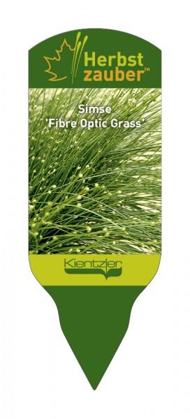Scirpus™ 'Fibre Optic Grass'