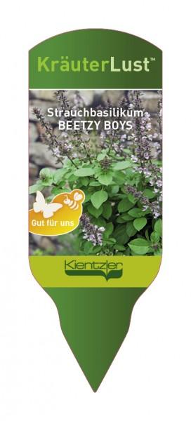 Ocimum x hybridum BEETZY BOYS Lavender Kanzi Strauchbasilikum