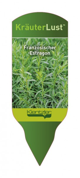 Artemisia dranunculus 'Pfefferkorn'