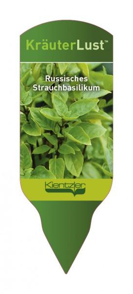 Ocimum x hybridum Russisches Strauchbasilikum