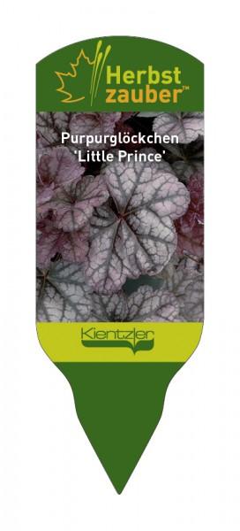 Heuchera Hybride 'Little Prince'