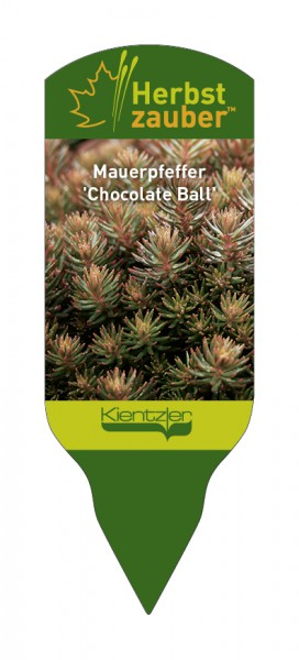 Sedum hakonense 'Chocolate Ball'