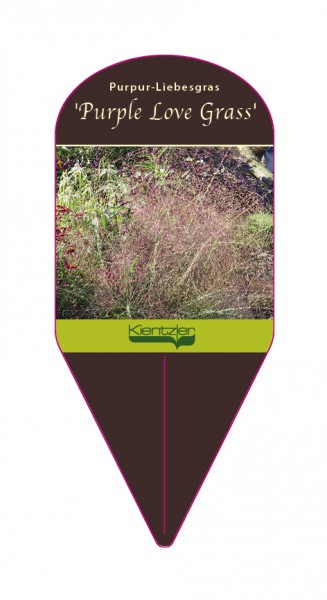 Eragrostis spectabilis 'Purple Love Grass'