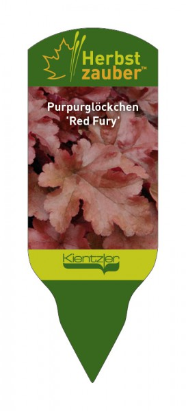 Heuchera Hybride 'Red Fury'