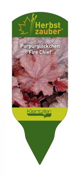 Heuchera Hybride 'Fire Chief'