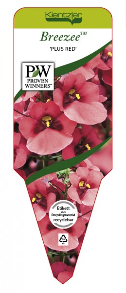Diascia Breezee™ 'Plus Red'