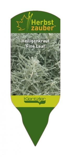 Santolina 'Fine Leaf'