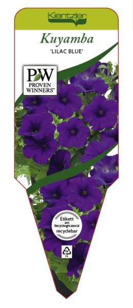 Petunia KUYAMBA 'Lilac Blue'