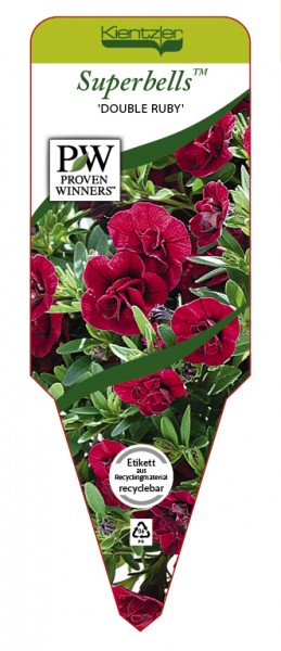 Calibrachoa Hybr. Superbells™ 'Double Ruby'