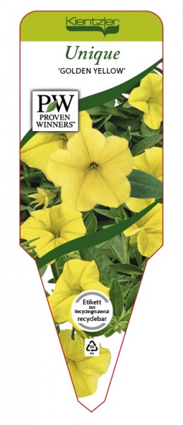 Calibrachoa Hybr. Superbells™ UNIQUE 'Golden Yellow'