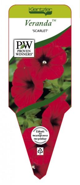 Petunia Veranda 'Scarlet'