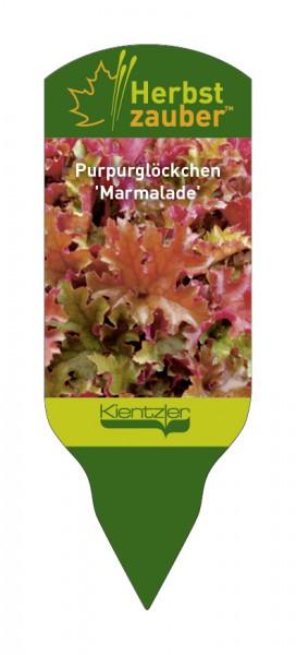 Heuchera Hybride 'Marmalade'