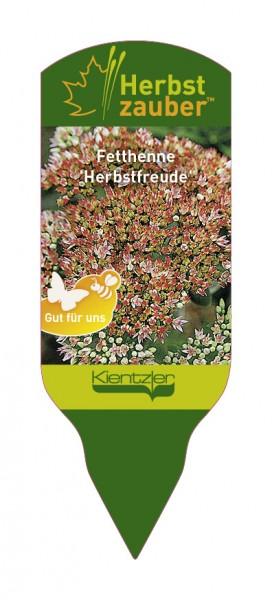 Sedum Hybride 'Herbstfreude'