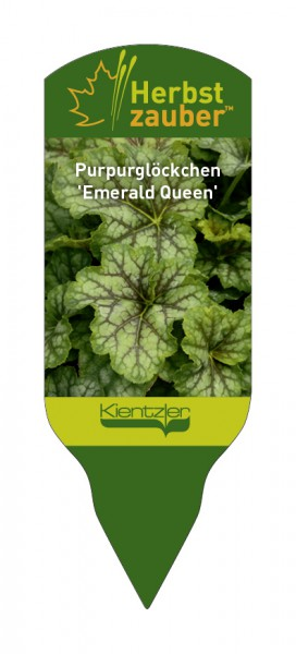 Heuchera 'Emerald Queen'