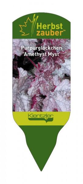Heuchera Hybride 'Amethyst Myst'
