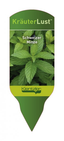 Mentha x piperita 'Swiss Mint'