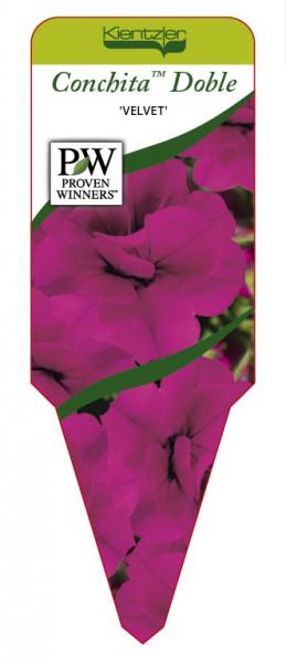 Petunia Hybr. Conchita™ Doble 'Velvet'