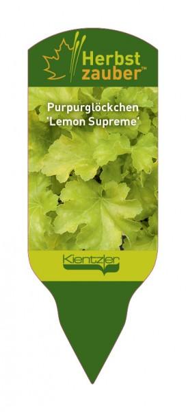Heuchera 'Lemon Supreme'