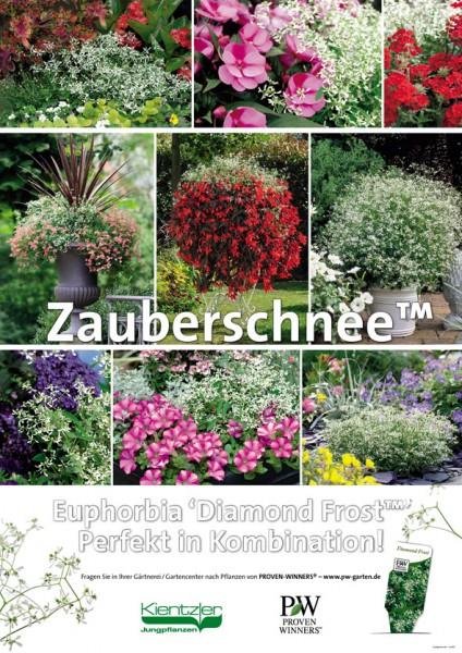 Poster Proven Winners 'Zauberschnee'