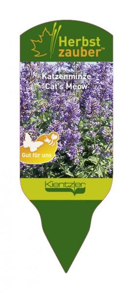 Nepeta Hybride 'Cat's Meow'