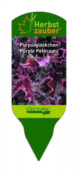 Heuchera Hybride 'Purple Petticoats'