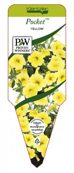 Calibrachoa Hybr. Pocket 'Yellow'